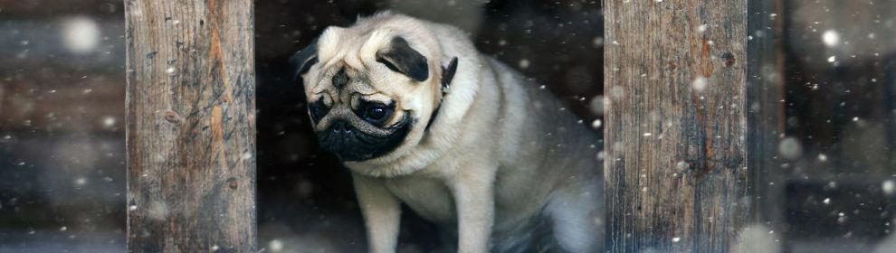 Dog enjoying life.